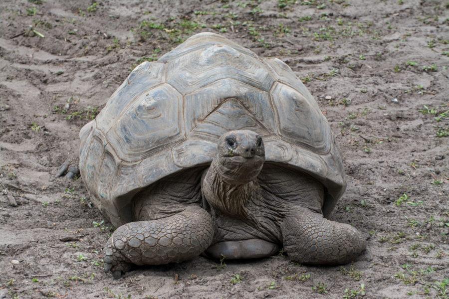Seychellen_Riesenschildkröte_Marion_Boehm_Email
