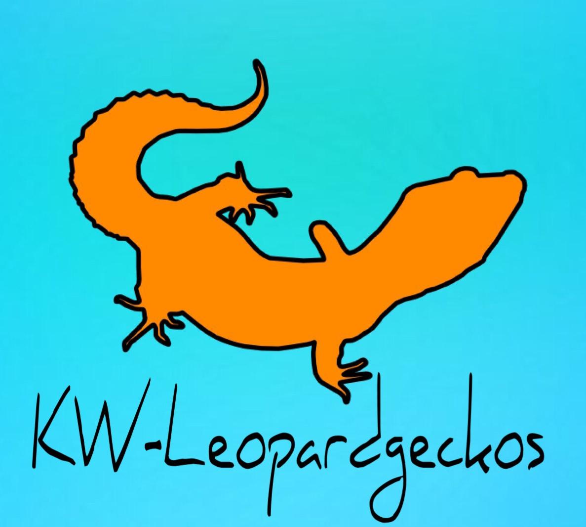 Kettwiger Leopardgeckos