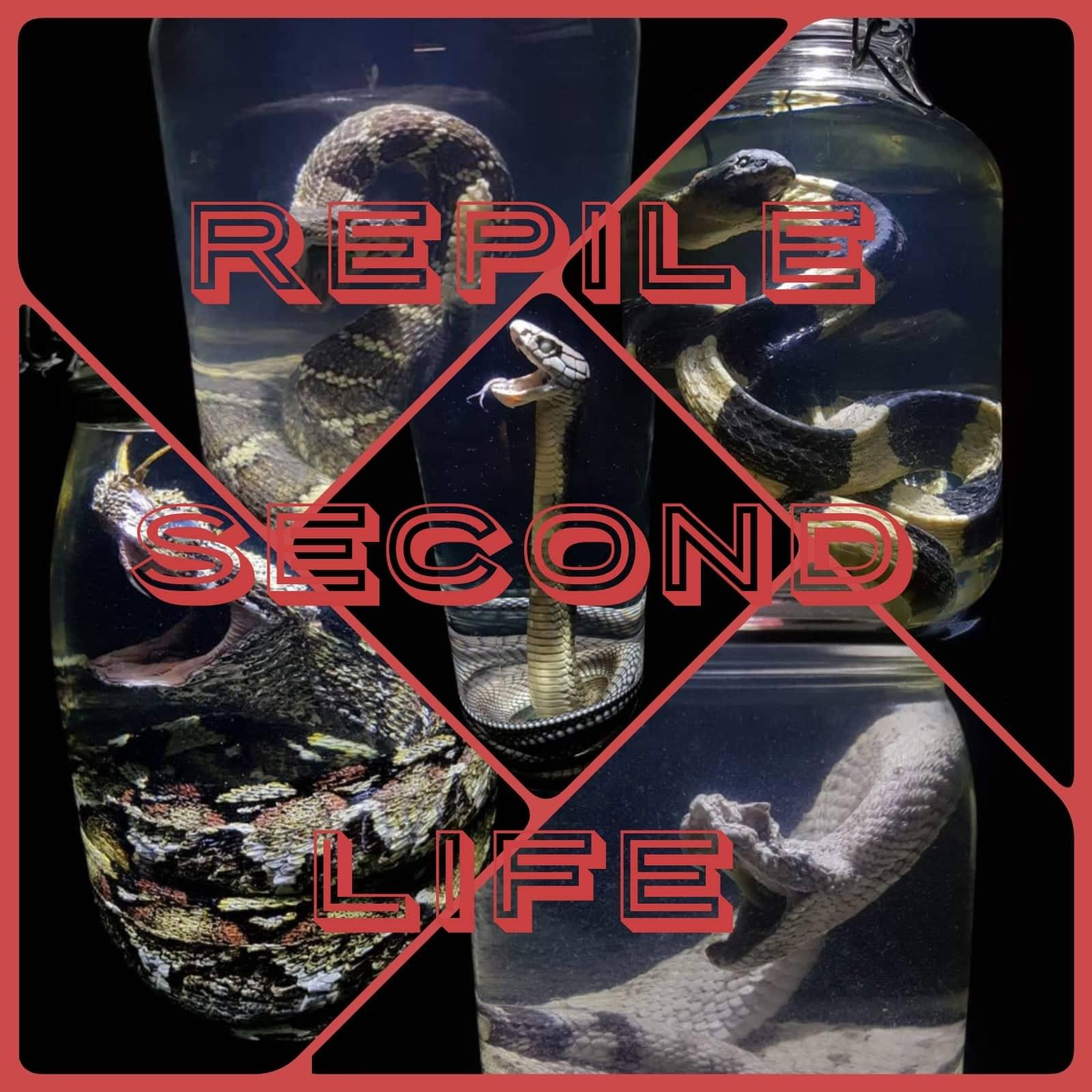 Reptile Second Life
