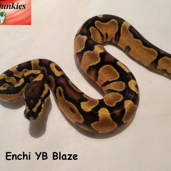 01-enchi-yb-2
