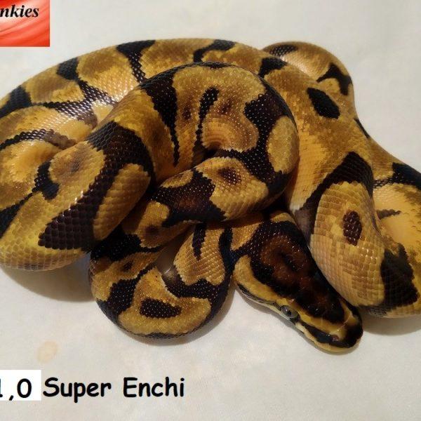 10-sup-enchi-2