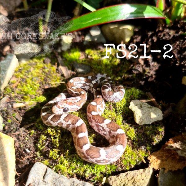 PicsArt_07-20-09.22.41